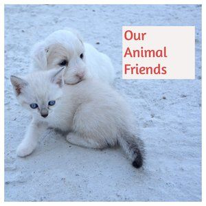 Like this post for animal friend items